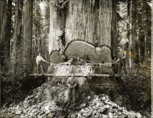 Vintage Photos of Lumberjacks (3)