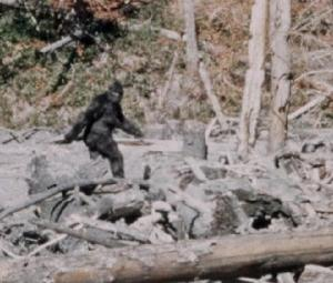 8584-911-call-bigfoot