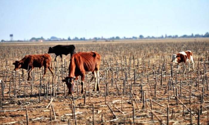 Drought in Southern Africa 2015 -