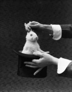 1930s Magician Hands Pulling Rabbit Out Of Top Hat